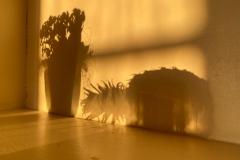 Still-Life-Shadows