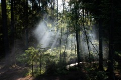 L_Landskap1
