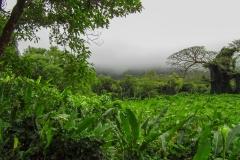 Nuuanu-Valley-Honolulu